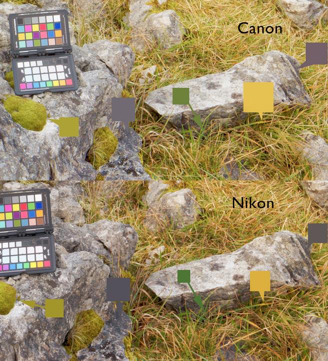 nikon-vs-canon-srgb