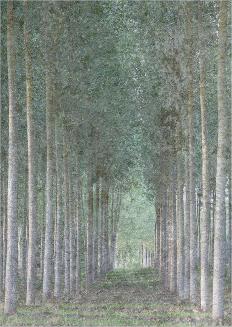 Lines of Tall Trees