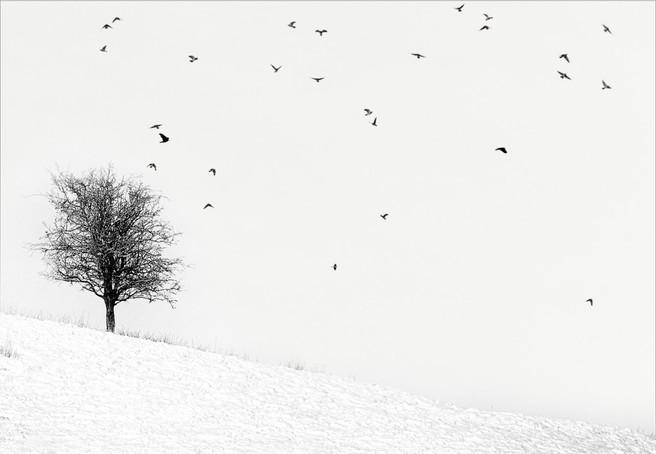 'Twenty Seven Birds' by Janet Burdon