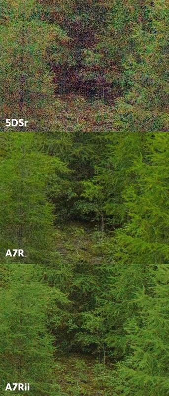 So sức mạnh cảm biến Sony A7r Mark II và Canon 5Dsr - 85017