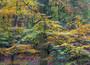 Foliage for OL