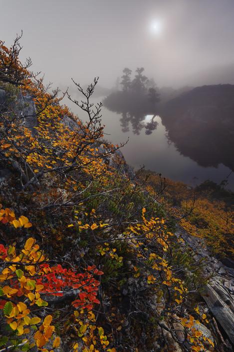 Foggy-fagus-On-Landscape