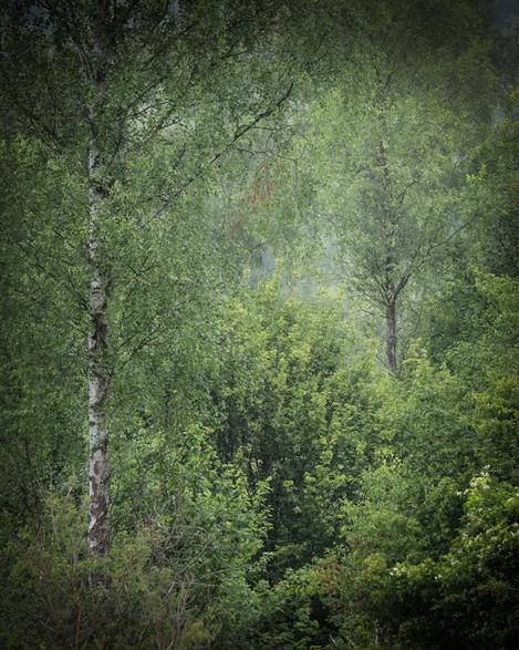 On Landscape 1