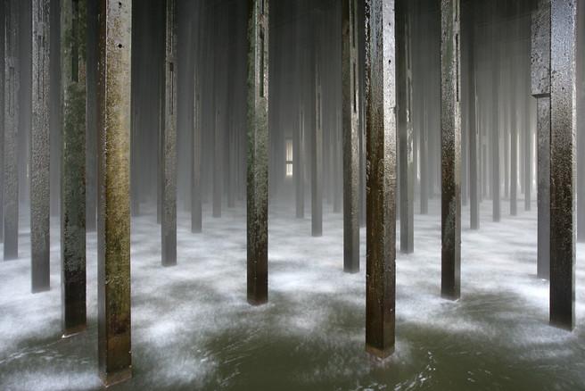 Concrete Rainforest
