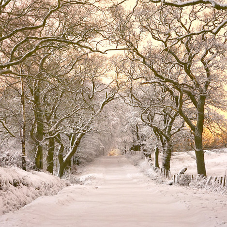 saline_road_in_snow