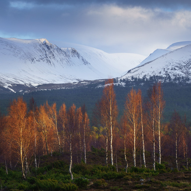Birch and Mountains, Lairig Ghru, Joe Cornish Joe Cornish