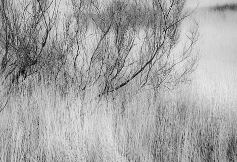Day1_Horbagost-Willows_AP-nopair