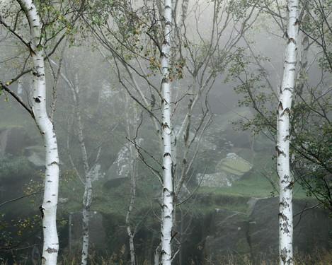 Birches, Rocks, Lichen, Bole Hill, Peak District, Eli Pascall-Willis, website