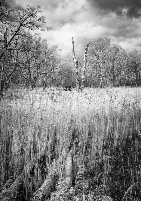 Broken, Foulden Common, Norfolk, Paula Cooper, website