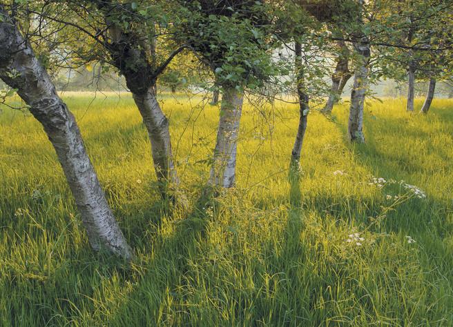 Birch Shadows, Yorkshire Wolds, Paul Moon, website