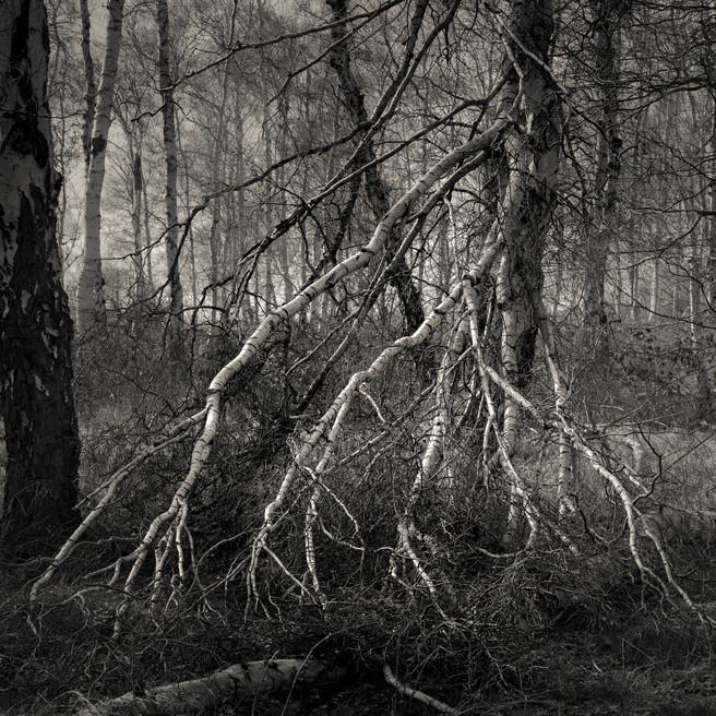 Fallen, Holme Fen, Cambridgeshire, Robin Jones, Facebook