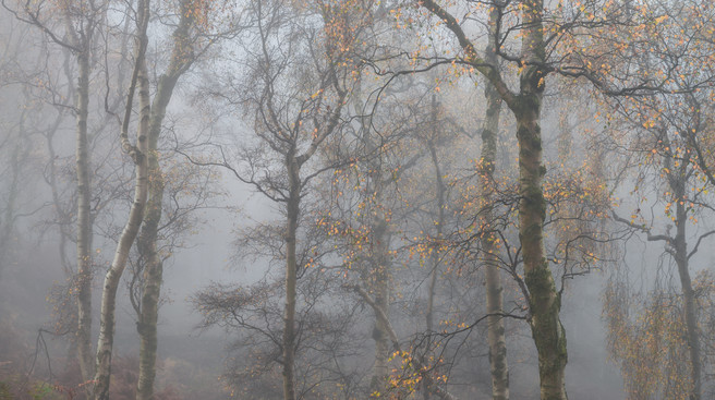 Autumn in the Peaks III, Bolehill Quarry, Roger Voller, website