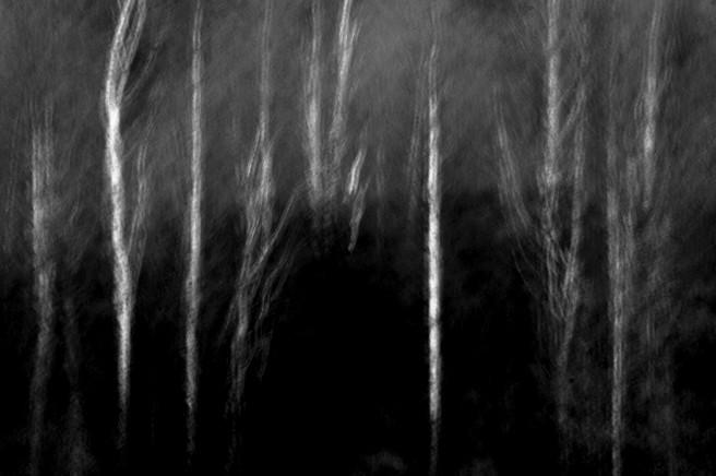 Winter birch, Crompton Moor, Oldham, Paul Adams, website