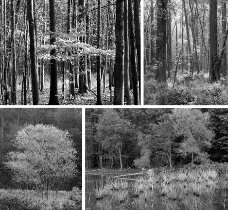 Gaetana Ebbole Trees of the Marsh 01